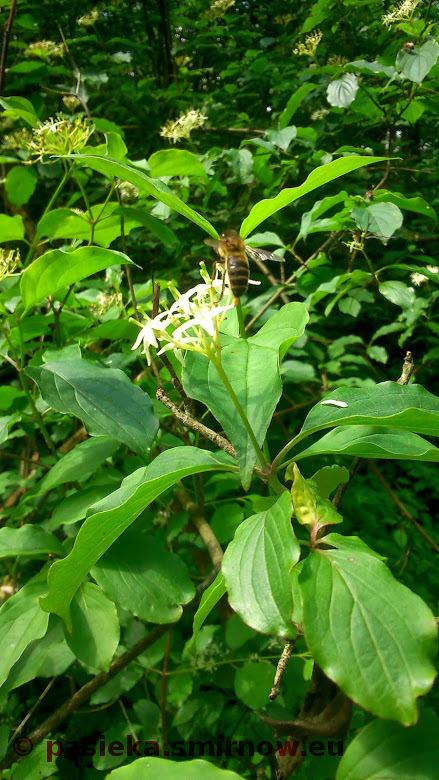 Pszczółka na kwiatku - jakie to banalne
