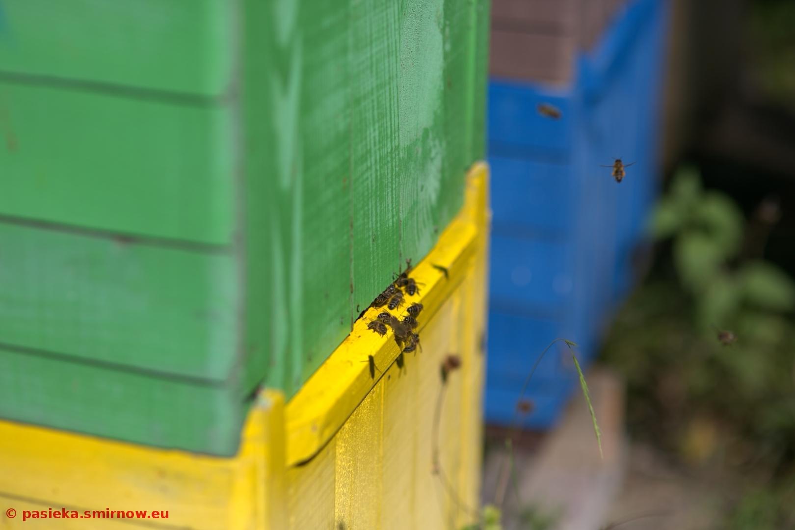 Pszczoły do ula!
