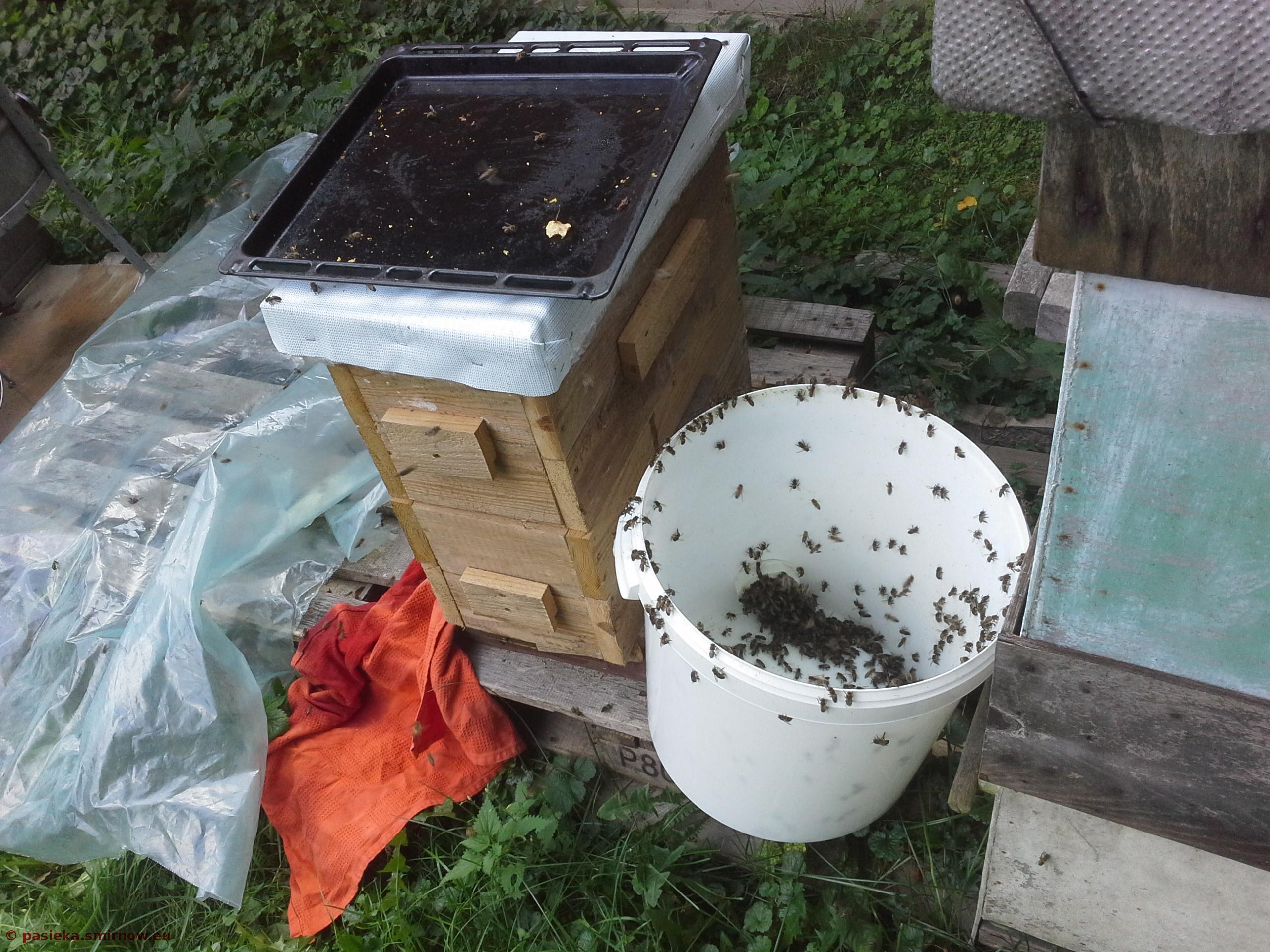 Pszczoły czyszczą naczynia