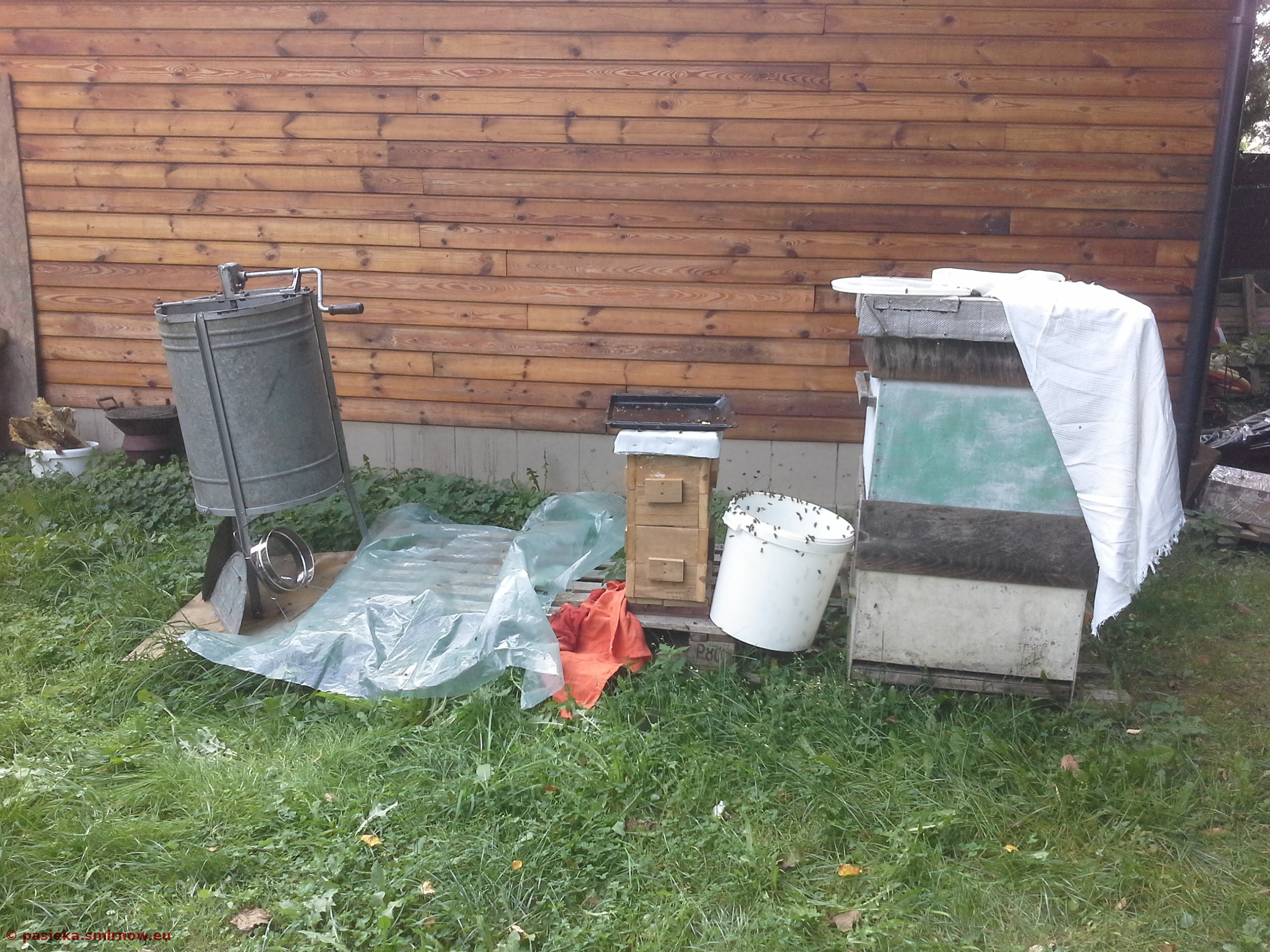Cudze pszczoły na pożytku