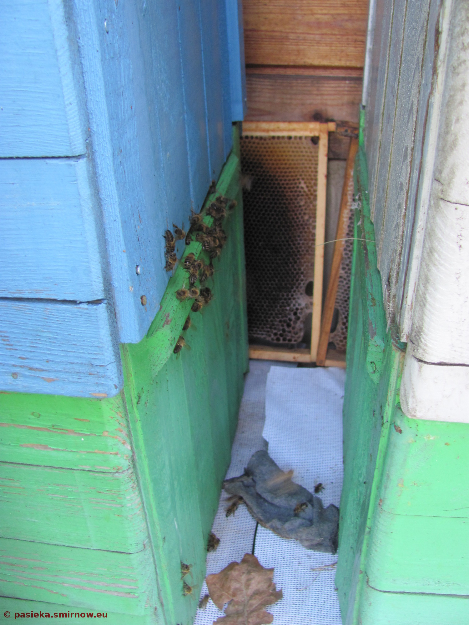 Pszczoły rabują