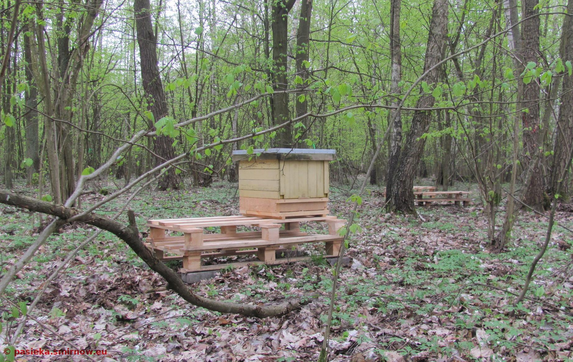 Pusty ul czeka na swoje pszczoły