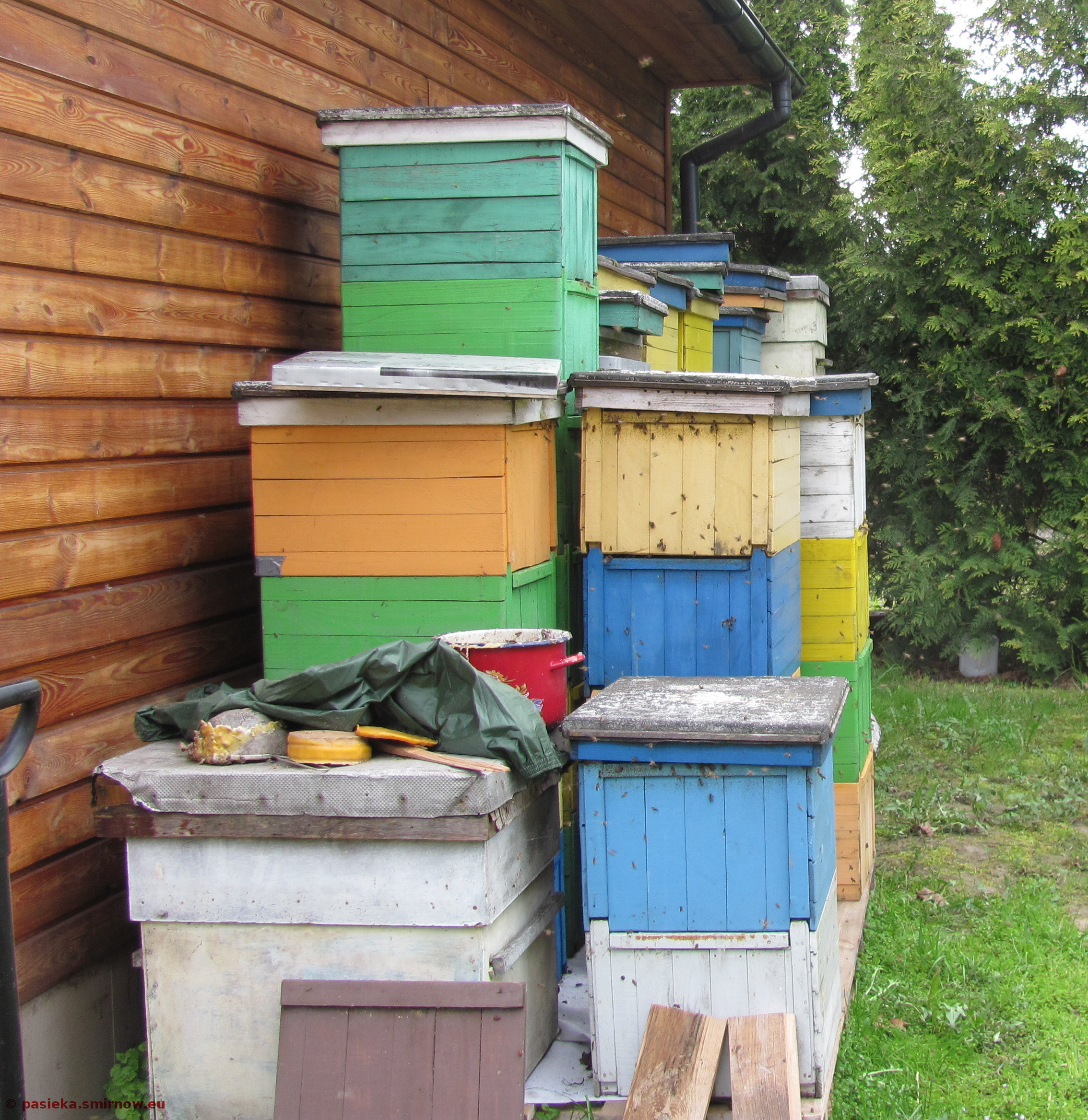 Pszczoły szaleją na pokarmie zimowym