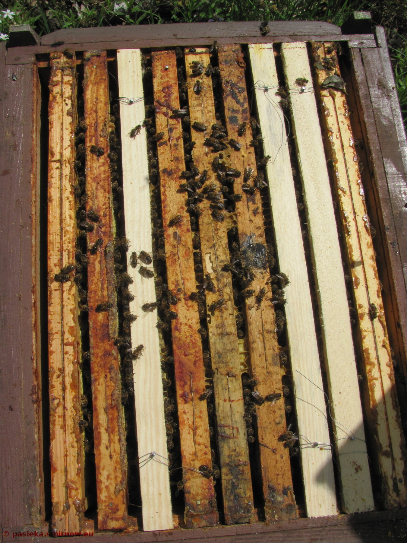Y01 Las - siła pszczół