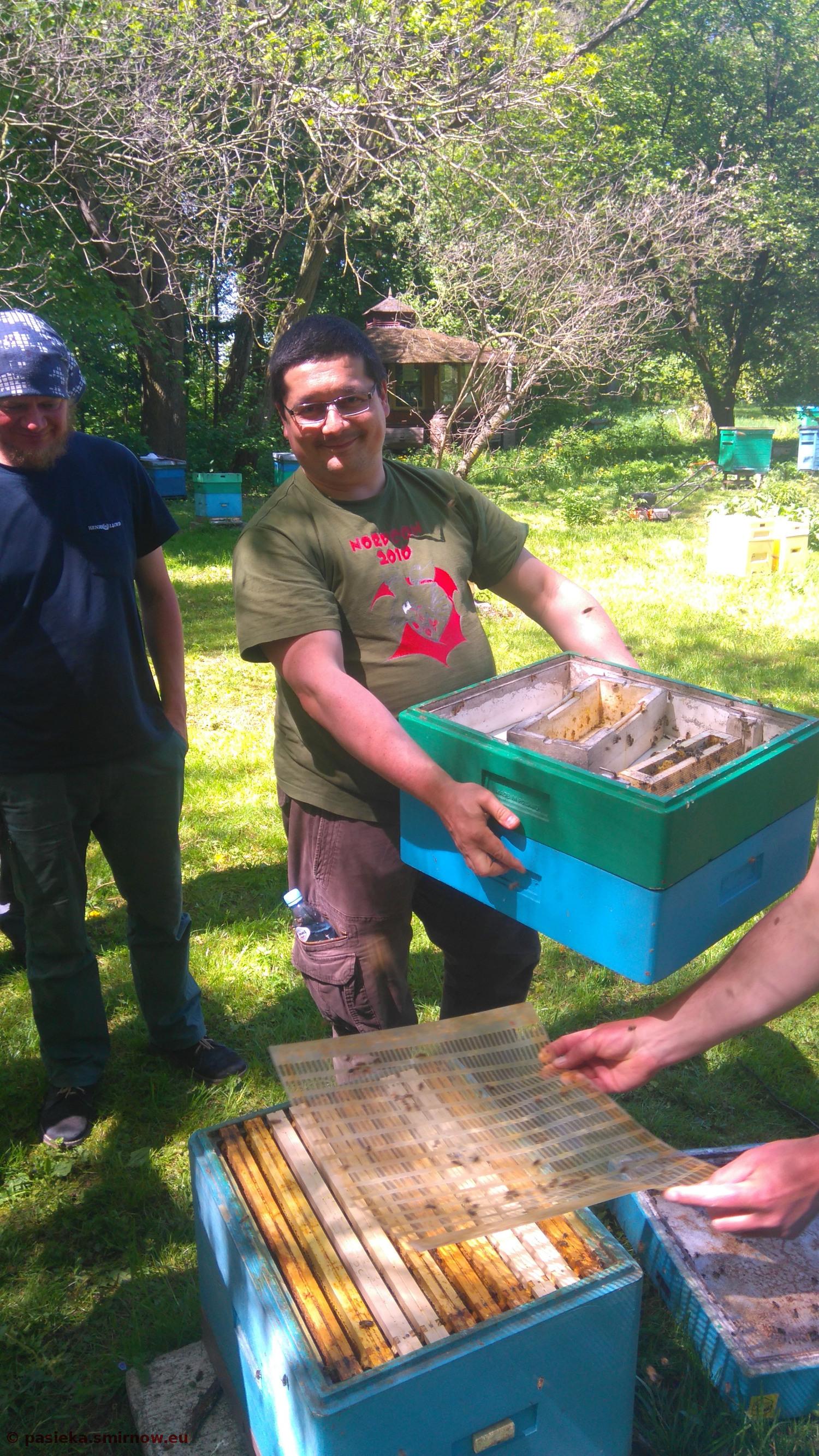 Praca przy pszczołach bezżądłowych