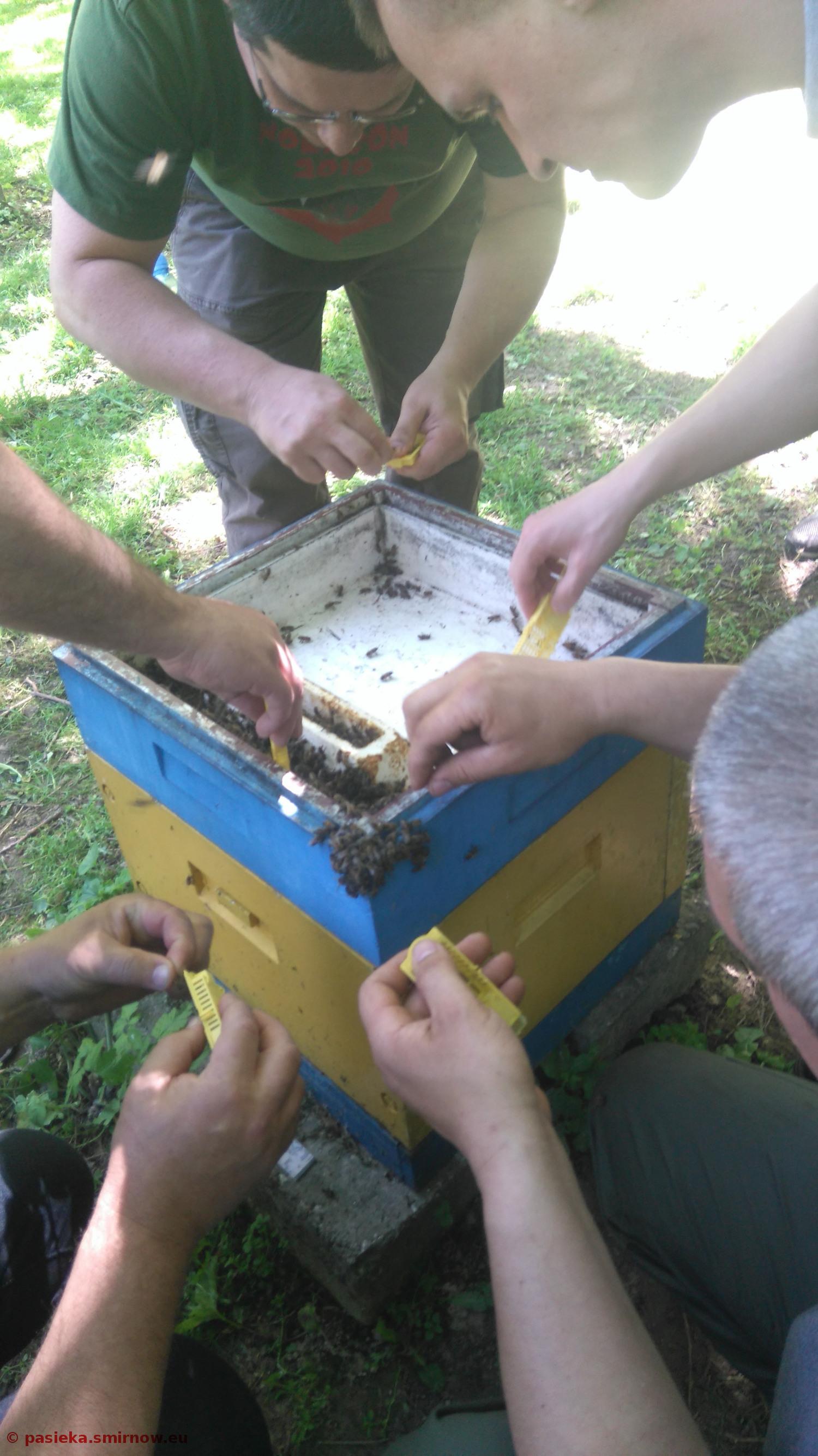 Praca z pszczołami bezżądłowymi