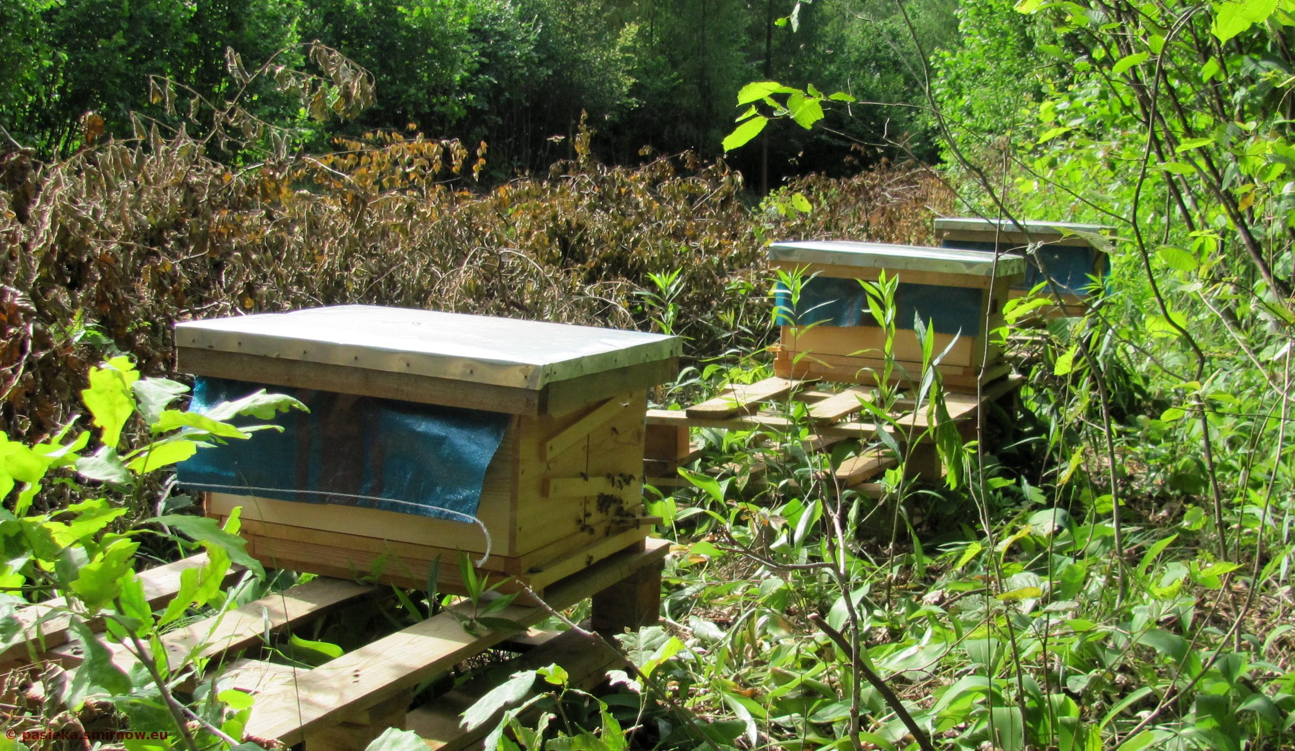 Pszczoły na Bazie