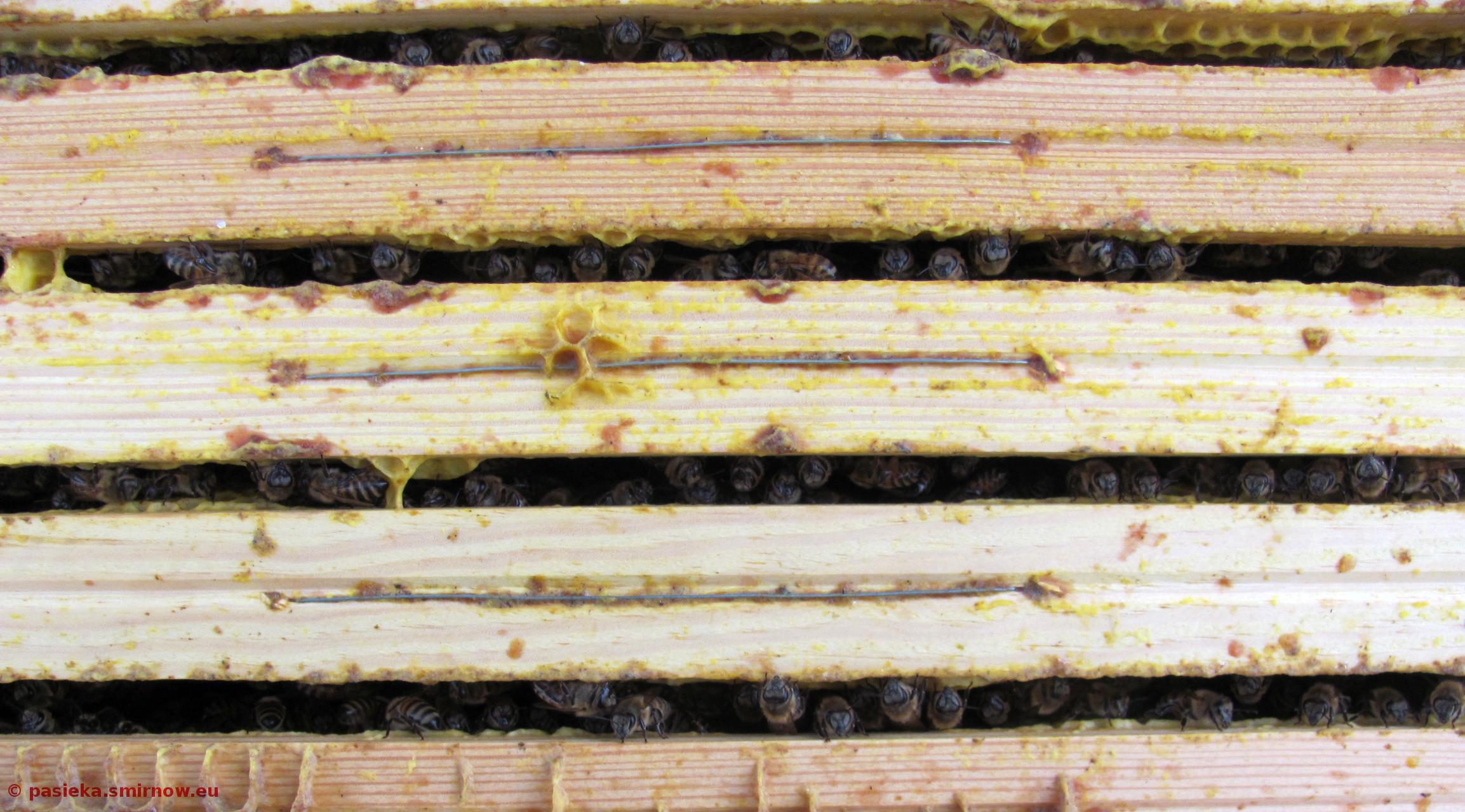 Pszczoły szykują się do zimy