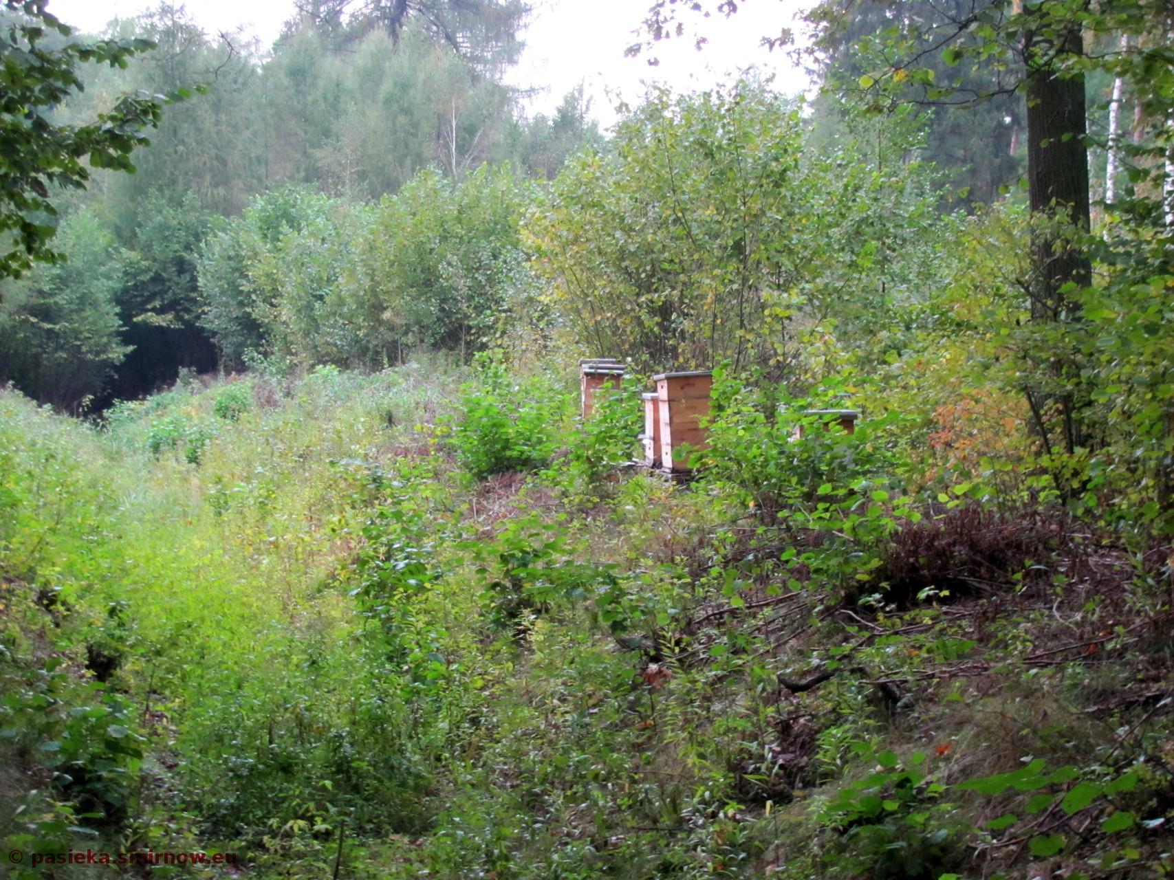 Widok na Y06 Baza pod koniec września, po zakończeniu prac z pszczołami