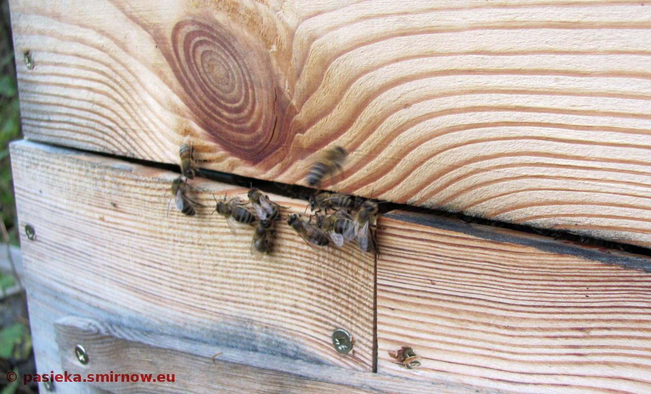 Y06Baza - grzybiarze ukradli powałki, więc pszczoły mają nowy wylotek