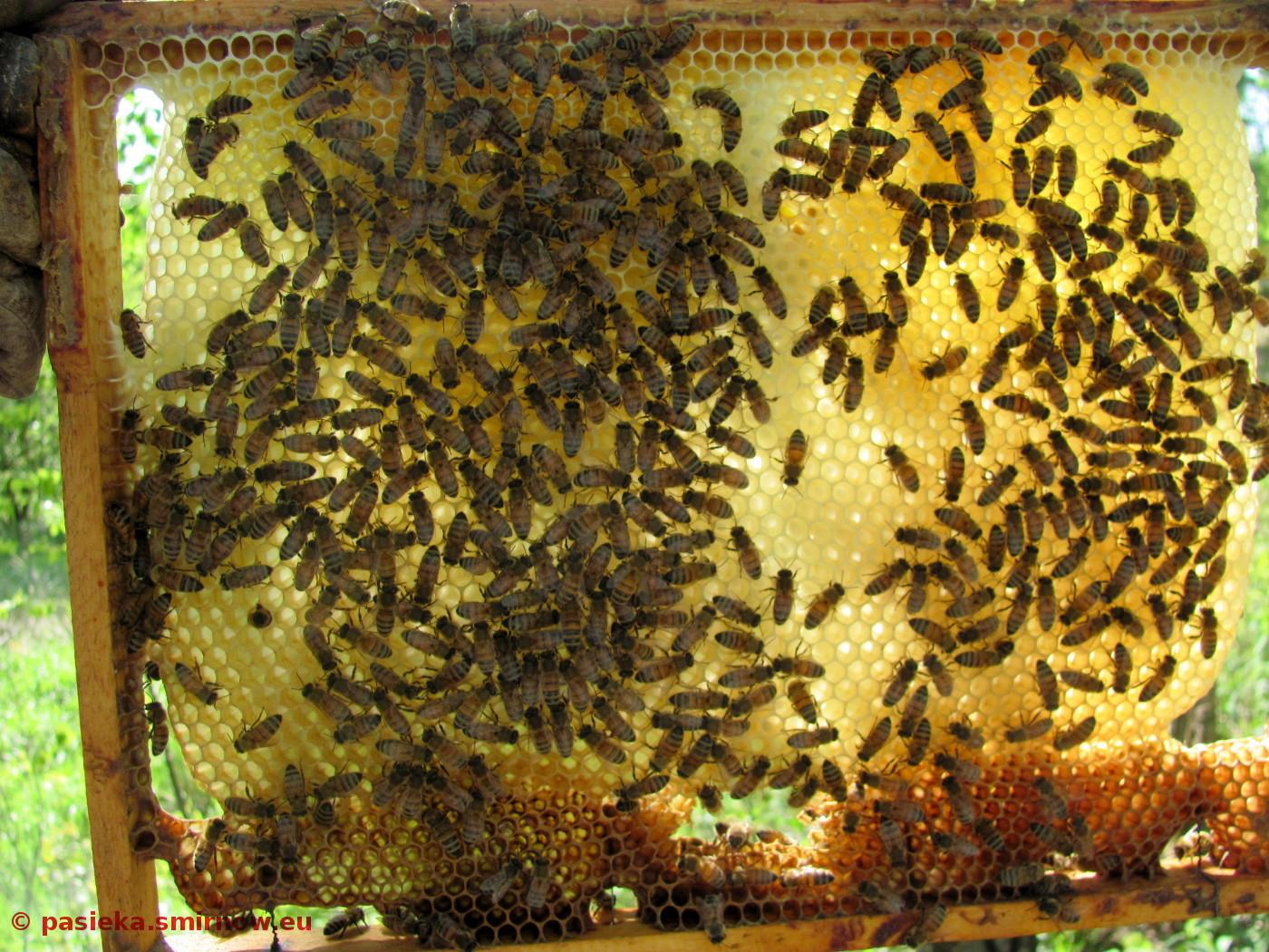 Piękne pszczoły