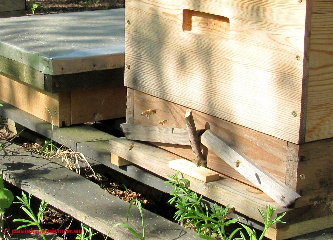 Pszczółka w pracy