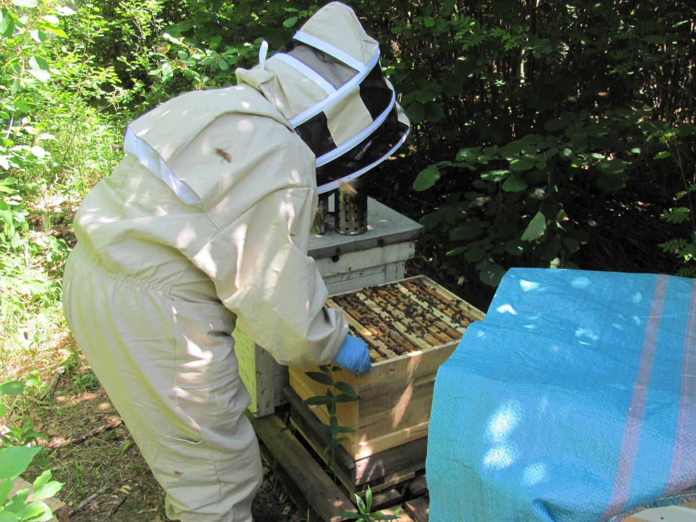 Eliza pszczelarzy