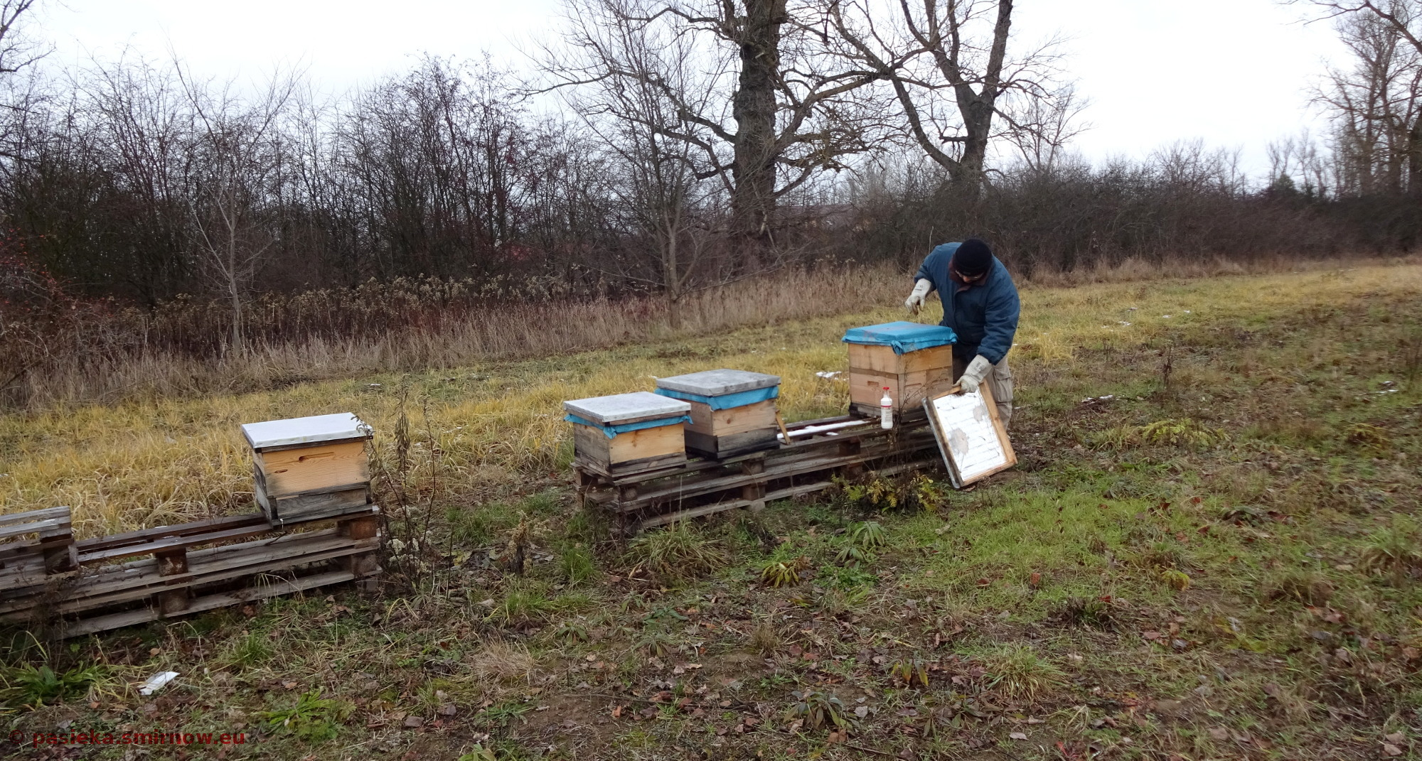 Widoczek na toczek i pszczelarza