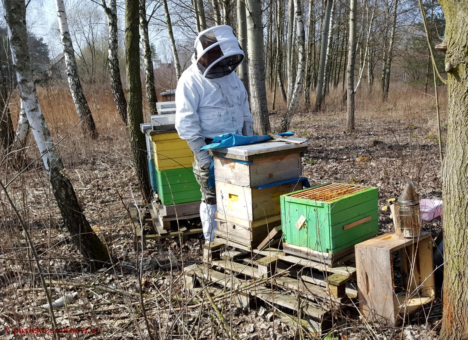 Pszczółki SurF1 mają się dobrze