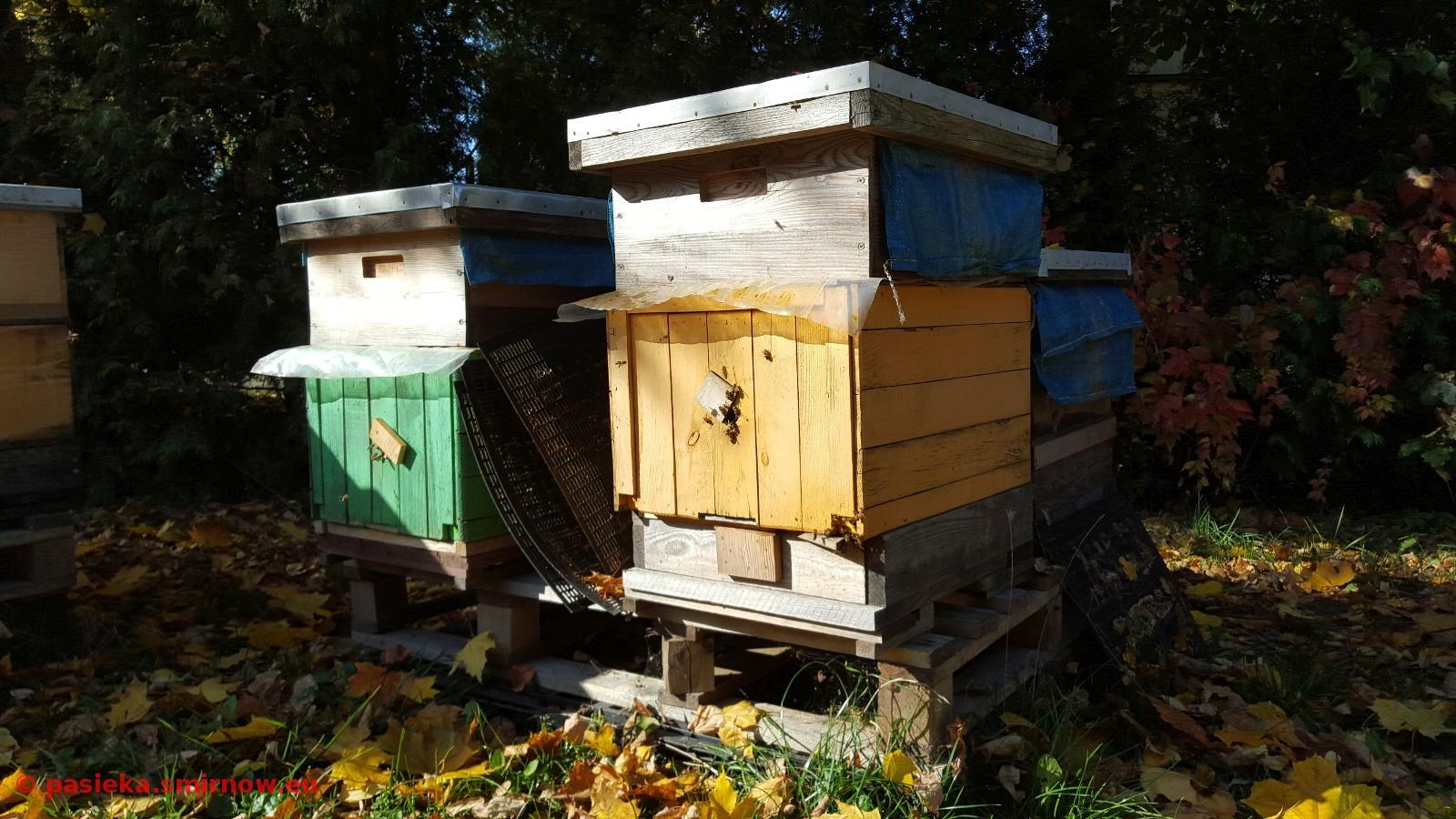 Przydomowe pszczoły
