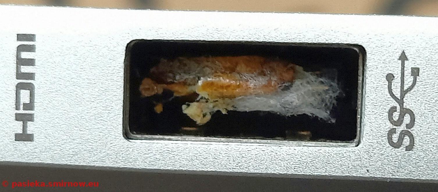 Motylica w USB